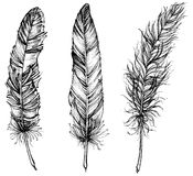 Detailed feathers. Hand drawn stock illustration