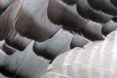 Detailed feathers Royalty Free Stock Images