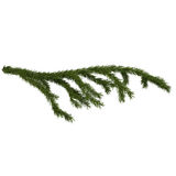 Detailed fir branch isolated on white, 3d illustration Stock Images