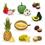 Detailed flat vector set of different exotic fruits. Natural product. Organic and tasty food. Vegetarian nutrition. Set of different exotic fruits. Natural royalty free illustration