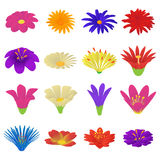 Detailed flowers icons set, cartoon style Stock Image