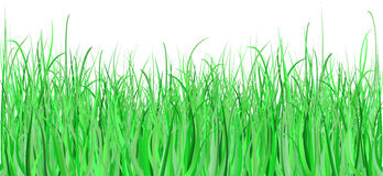 Detailed grass Royalty Free Stock Photography