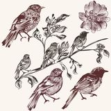 Detailed hand drawn birds set in vintage style Royalty Free Stock Photo