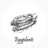 Detailed hand drawn black vector illustration of eggplants  on white Royalty Free Stock Photo
