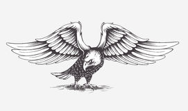 Detailed Hand Drawn Eagle. Vector. Stock Photo