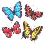 Detailed hand drawn marker butterflies. Set of butterflies Stock Photography
