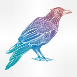 Detailed hand drawn raven bird illustration. Royalty Free Stock Photography