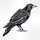 Detailed hand drawn raven bird illustration. Stock Photography