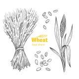 Wheat hand drawn illustration Royalty Free Stock Photos