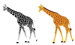 Detailed illustration of giraffe Stock Photos