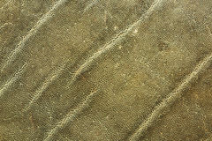 Detailed image of african elephant leather. Texture for your design showing real animal pelt Stock Image