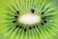Detailed Kiwi Slice Cut Texture Pattern, Fruit Cross Section Macro, Horizontal Background Closeup Stock Photography
