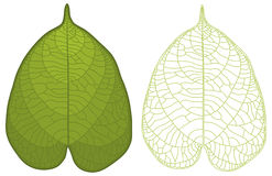 Detailed leaf Royalty Free Stock Photos
