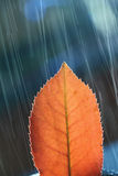 Detailed Leaf in rain Stock Image