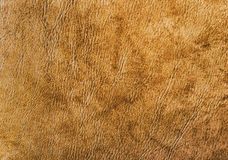 Detailed leather material background texture. More available royalty free stock photo
