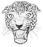 Detailed Leopard Face Vector Illustration - Handmade Royalty Free Stock Images