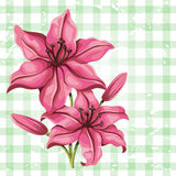Detailed lily flower in vintage style. Vector Royalty Free Stock Images