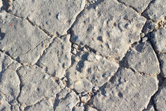 Detailed macro cracked cement road surface Royalty Free Stock Images