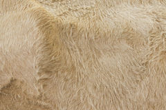 Detailed macro picture of cow skin. Royalty Free Stock Images
