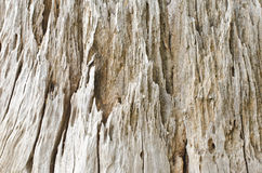 Detailed old stump. Royalty Free Stock Images