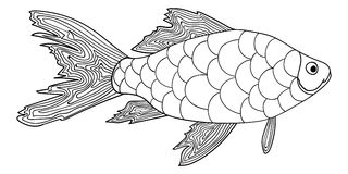 Detailed ornamental sketch of a fish. Hand drawn zentangle for adult anti stress. Coloring page with high details  on white background. Zentangle pattern for Royalty Free Stock Photography