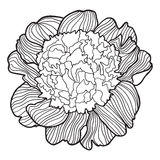 Detailed ornamental sketch of peony,. Hand drawn for adult anti stress. Coloring page with high details  on white background. pattern for relax and meditation Royalty Free Stock Photography