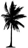 Detailed palm tree. Isolated on white background Stock Photography