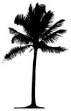 Detailed palm tree Royalty Free Stock Photos