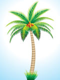 Detailed palm tree with coconut Royalty Free Stock Images