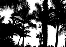 Detailed palm trees Stock Images