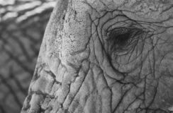 Detailed photo of the eye of an African elephant, photographed at Knysna Elephant Park, South Africa. Detailed photo of the eye of an African elephant stock photo