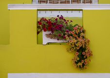 Detailed photo of house with flowers outside in the Malay Quarter, Bo Kaap, Cape Town, South Africa. Historical area of brightly painted houses in the city royalty free stock photo