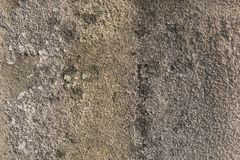 Molded grunge concrete wall. A detailed photo of a molded grunge concrete wall Royalty Free Stock Photos