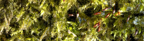 Detailed photo of moss growing on tree bark Stock Photography