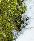 Detailed photo of moss growing on tree bark bordering with melting ice Stock Image