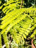 Detailed photo of vivid green plant, beauty in nature Stock Photos