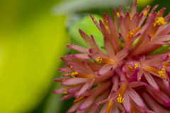 Detailed pink flower in the wild. Tiny detailed pink flower in the wild Stock Photo