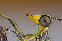 Detailed profile of an antlion Royalty Free Stock Photo