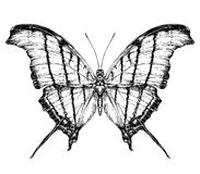 Detailed realistic sketch of a butterfly vector illustration