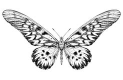 Detailed realistic sketch of a butterfly Stock Photos