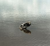 Lone rock in lake. Detailed seascape of a lone rock in water Royalty Free Stock Photography