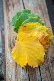 100 detailed sharp för serie för extremt gröna leavesmegapixels röd till att vända Royaltyfri Bild