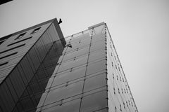 Skyscraper with bird Royalty Free Stock Image