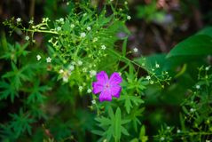 Purple flower with green grassy background stock image