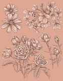 Detailed Sketchbook Hand Drawn Flower Set Stock Photos