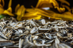 Detailed sunflower peels and blurred sunflowers on the background Stock Photography