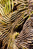Detailed Texture of a Cactus Royalty Free Stock Images