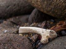 Detailed Tiny Bone Stock Photos