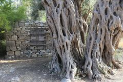 Tree Bark Stock Image