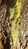 Detailed tree bark Royalty Free Stock Images
